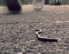 Worm Madness – One Minute Film